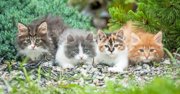 chats différentes couleurs