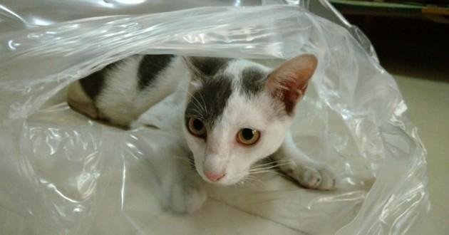 chat sac plastique