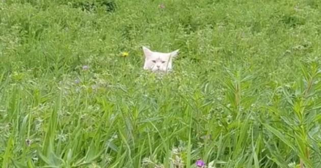 chatte dans l'herbe