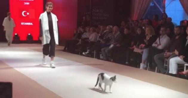 chat défilé mode