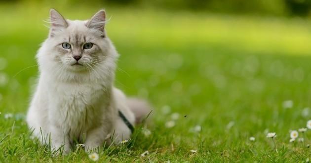 chat sortir ou intérieur
