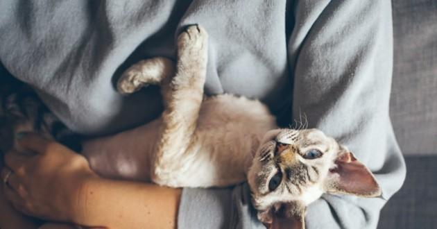 chat dans les bras de son humain