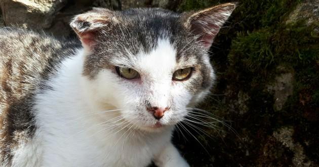 L'association LJD – Les Joyeux Diablotins chat