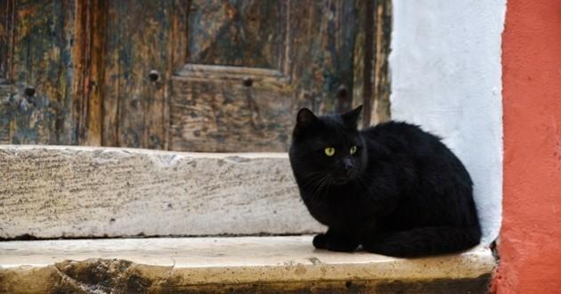chat disparu retrouve maîtres