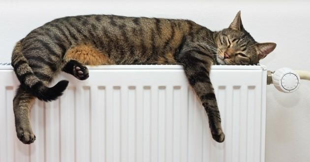 chat qui dort radiateur