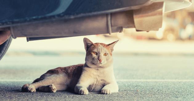 Chat errant blanc et roux couché sous une voiture