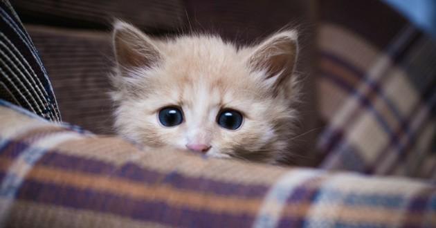 chat terrifié