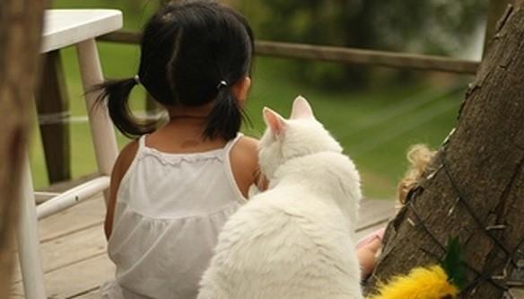 races de chat adaptées aux enfants