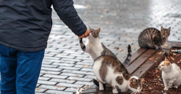Chat errant nourri par une personne