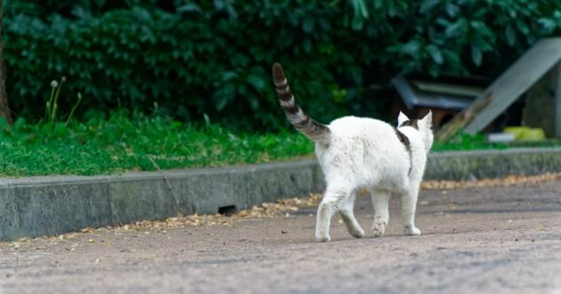 chat qui erre dans une rue