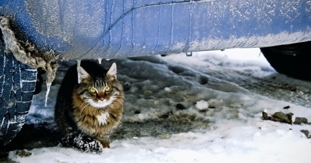 chat errant hiver froid