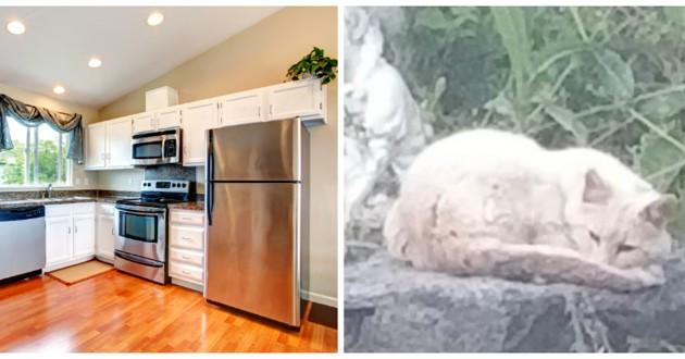 chat errant dans une maison
