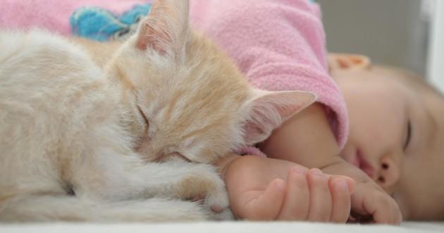 Chat roux qui dort à côté d'un bébé