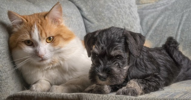 Chat et chien allongés