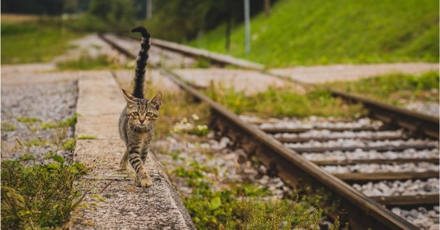 chat qui se promene pres des rails d'un train