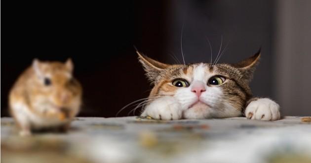 Rome : une armée de chats engagée pour éradiquer la prolifération des rats