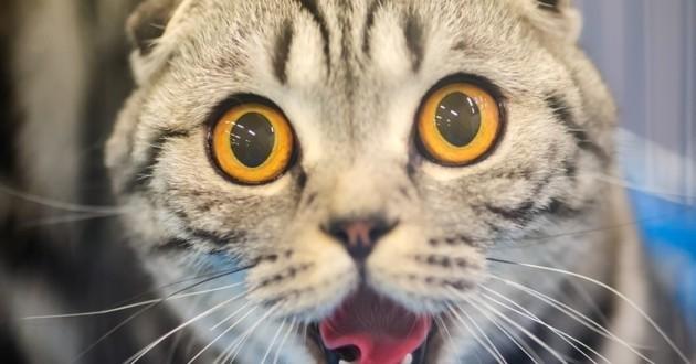 comportements étranges du chat