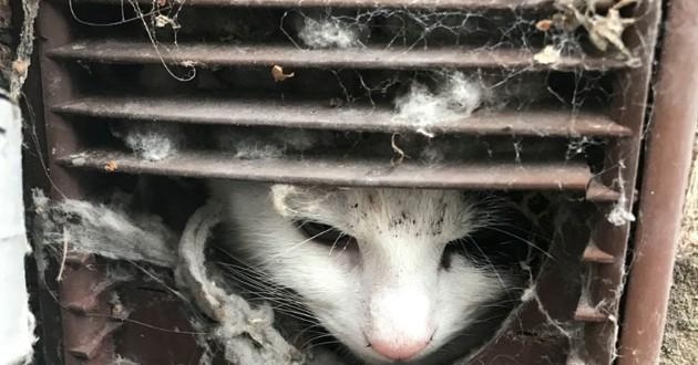 Une chatte se coince dans une cheminée, elle doit être beurrée pour en sortir