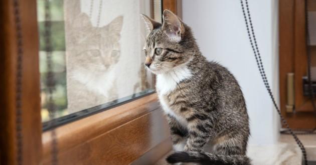 Les chats et les fen tres attention danger for Regarder par la fenetre