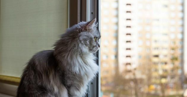chat fenetre oscillo battante