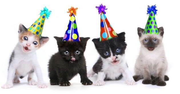 chat fête nouvel an