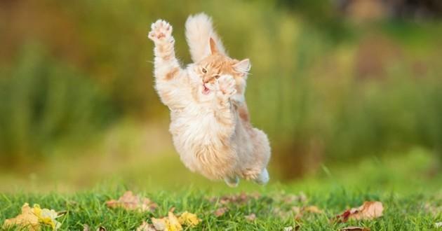 chat quart d'heure de folie
