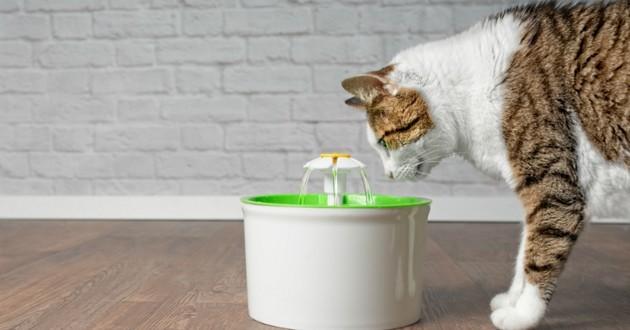 chat fontaine eau