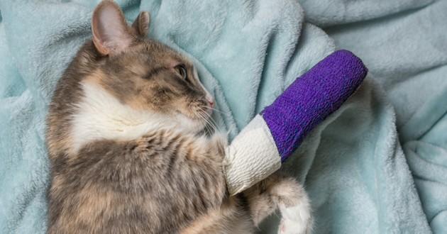 chat pattes fracturées