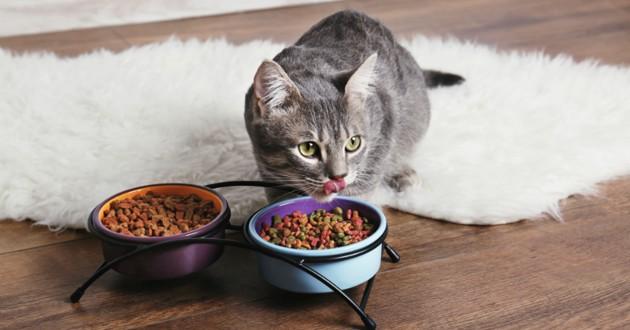 chat gamelle pleine