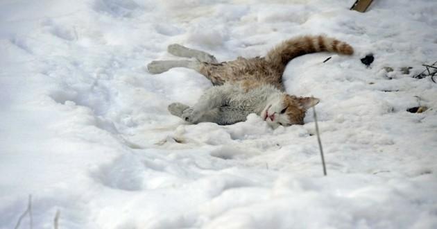 chat gelé