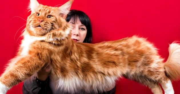 Pourquoi les chats sont-ils de plus en plus grands au fil des siècles ?