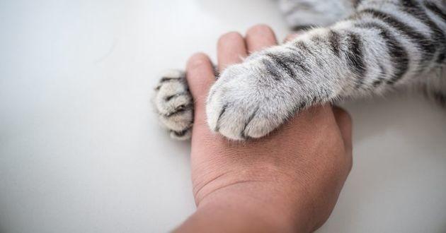 une patte de chat et une main