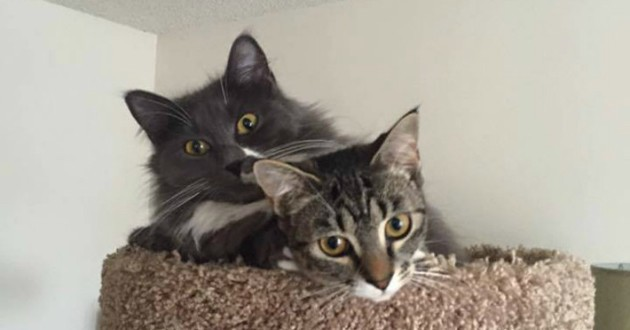 chattes soeurs