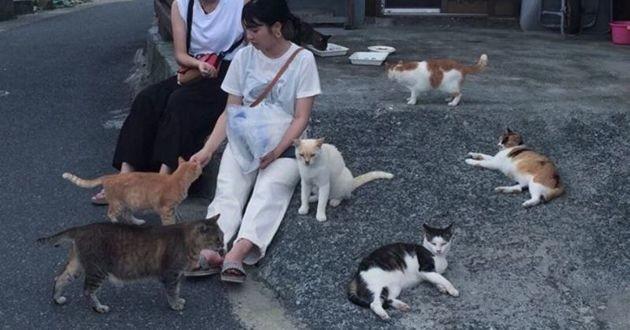 ile aux chats