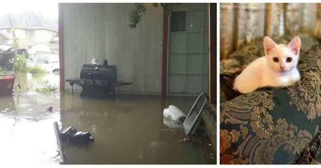 chat inondation