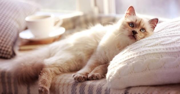 Le chat d\u0027extérieur plus heureux que le chat d\u0027intérieur ?