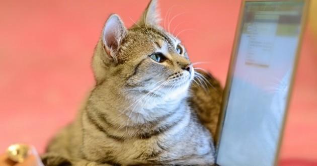 vente animaux sur internet