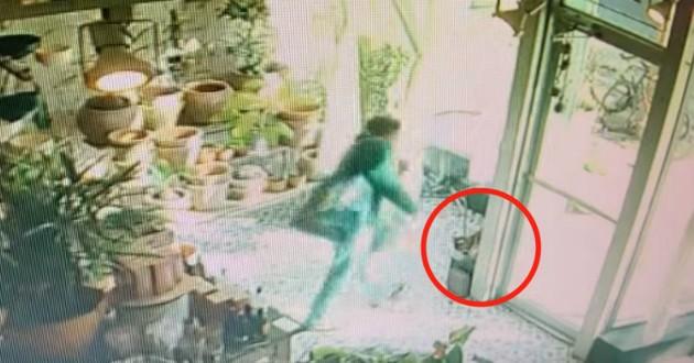 chat kidnappé chez fleuriste