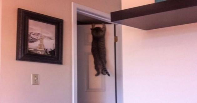 chat qui regrette son choix
