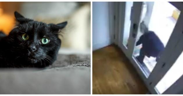 chat litière sale carton