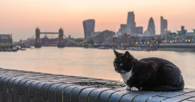 chat nuit londres