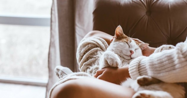chat installé confortablement dans une maison