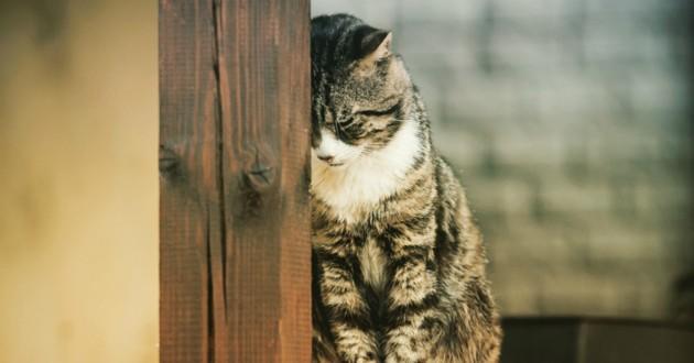 chat déprimé mal être
