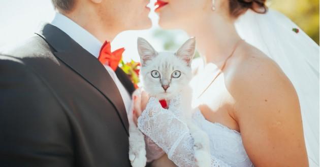 un chat avec des mariés