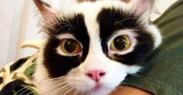 chat masqué héros