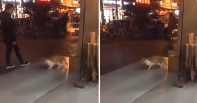 chat devant boutique