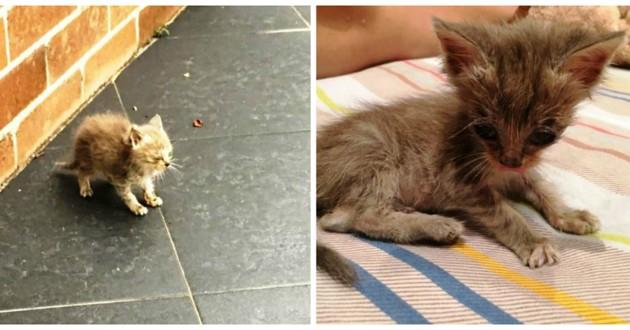 gaius chat abandonné rues