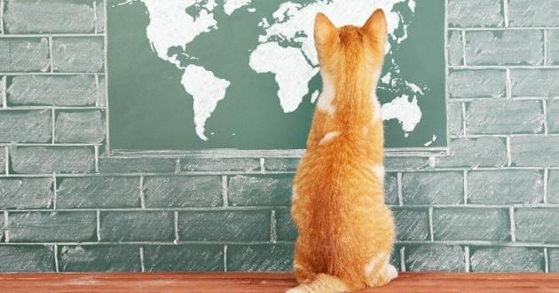 chat conquête monde
