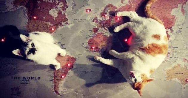 chat carte du monde