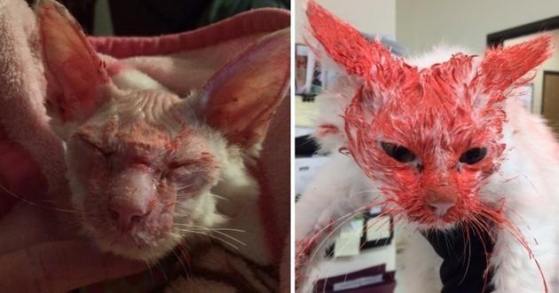 La justice américaine condamne un bourreau de chats